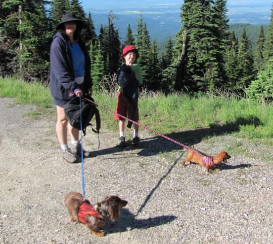 ready-for-camping-dogs-hikingatmtspokane