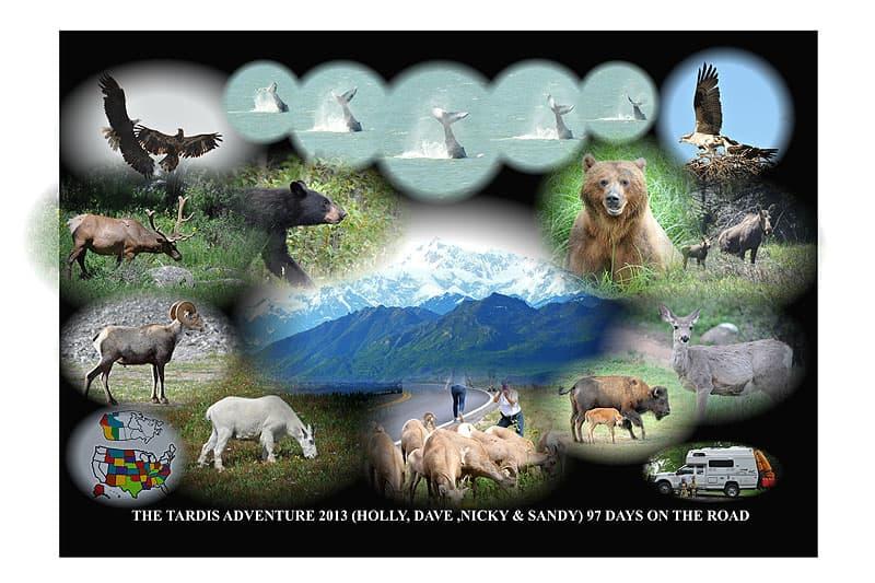 Alaska-animals-Fox