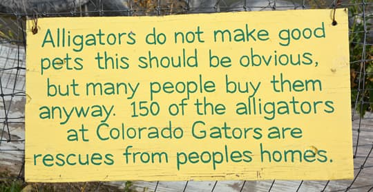 Arctic-Fox-990-Colorado-Gators-Not-Pets-Sign