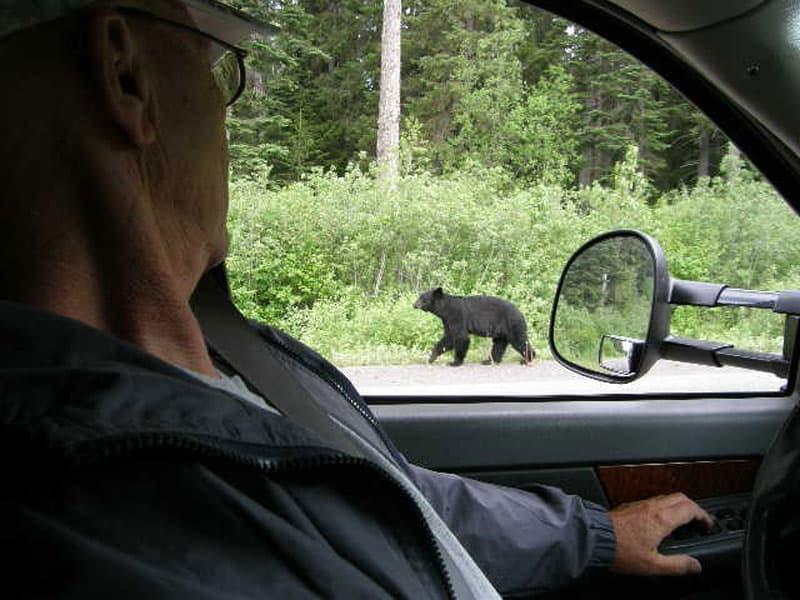 Bear Cassiar Highway British Columbia