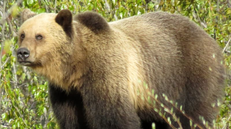 Bear Hwy 37 A near Meziaden Junction, BC