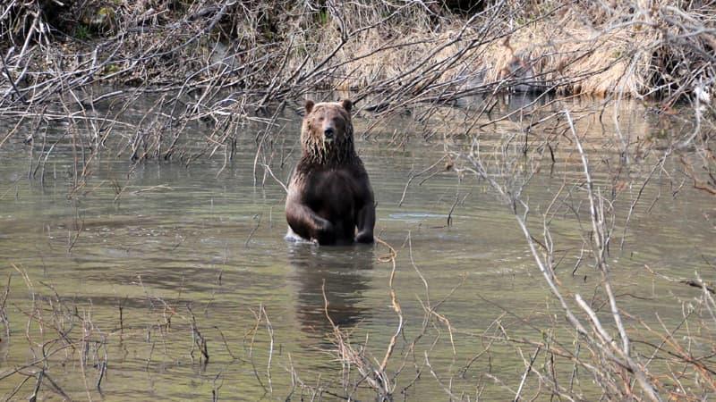 Bears Hwy 37A near Meziaden Junction BC