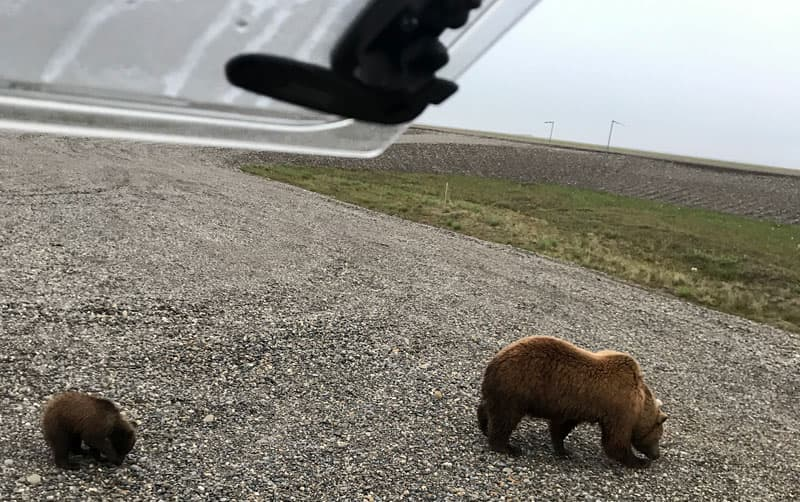 Bears close to Northstar Camper
