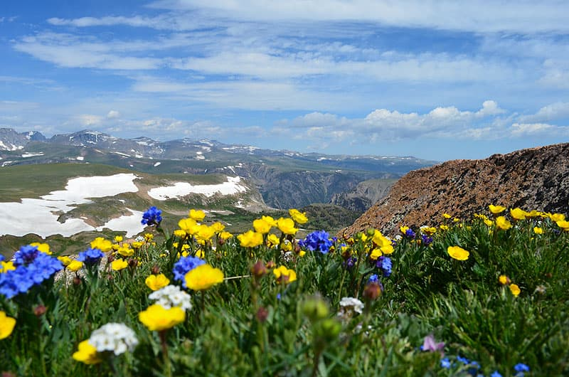 Beartooth Highway starting down towards Red Lodge