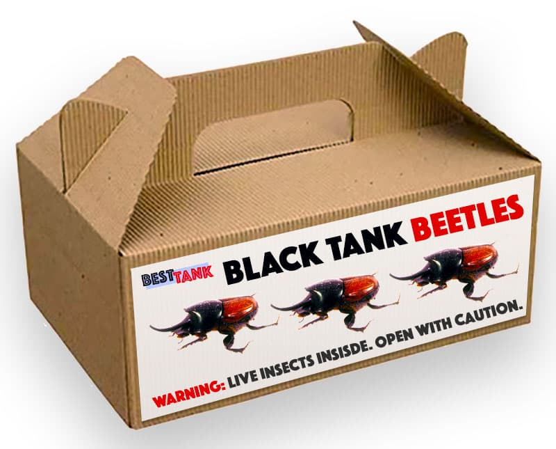 Black-Tank-Beetles-Box