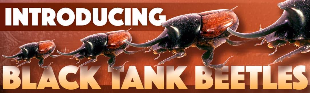 Black Tank Beetles