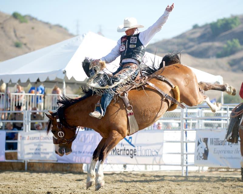 Bradley Harter Rodeo Bronc