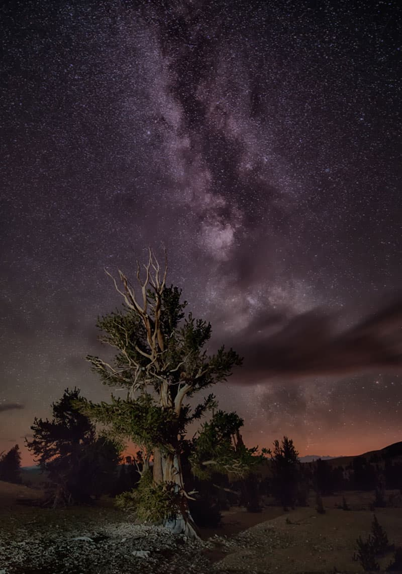 Bristescone Pine forest night time sky