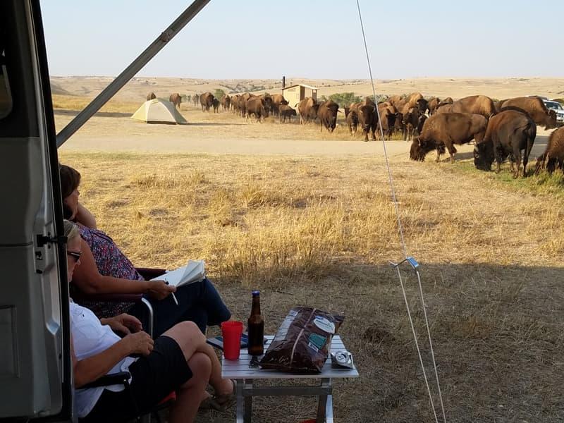 Buffalo So Close To Camper