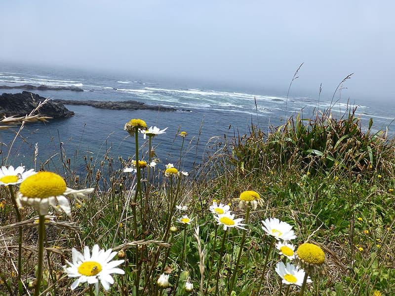 California Coast flowers