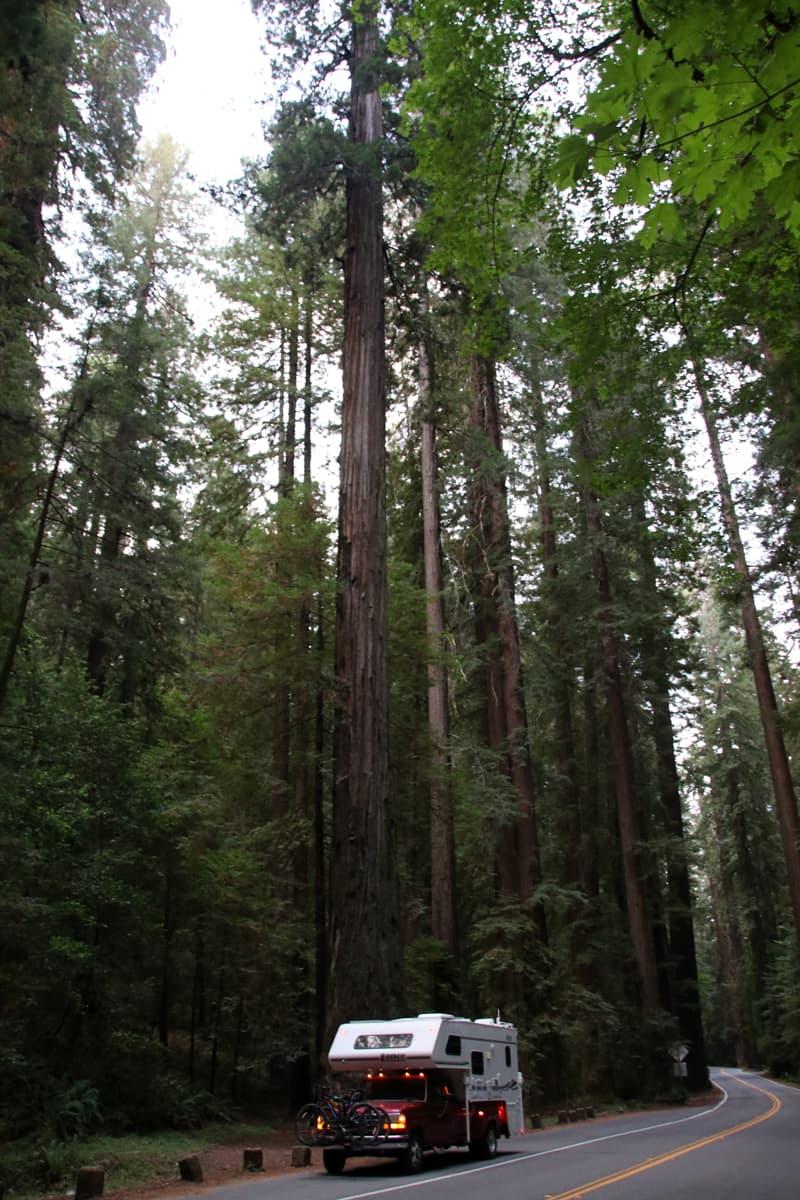 California Humboldt Avenue Of Giants
