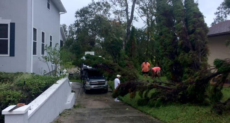 Tree almost hit Cirrus camper