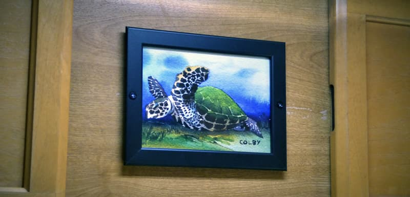 Mike's turtle watercolor postcard