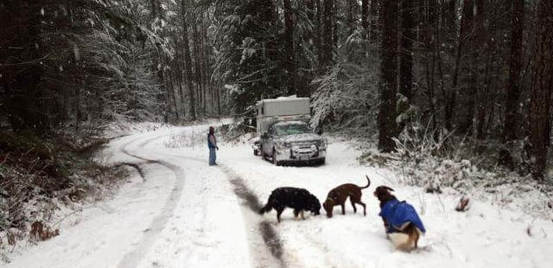 Cold weather camping with dogs