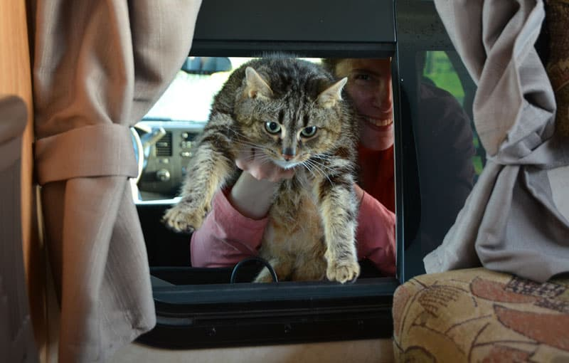 Compression Boot For Pets In Truck Campers