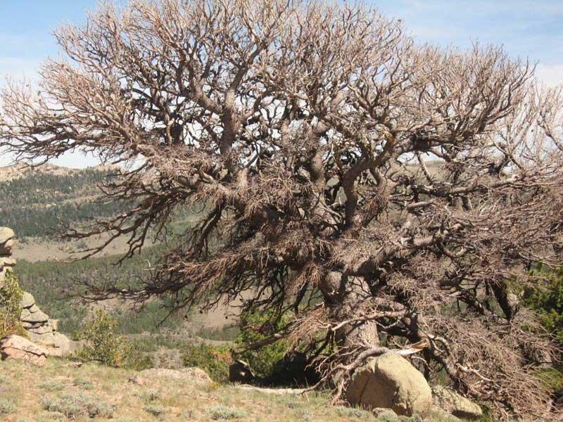 Cool Tree Sawmill