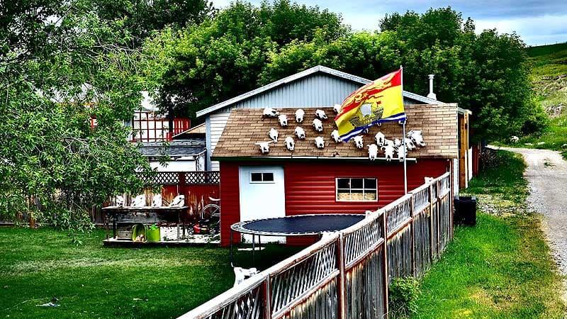 Cow Skull Roof, Pincher, Alberta