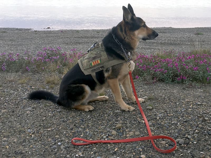 Toby at Prudhoe Bay estuary