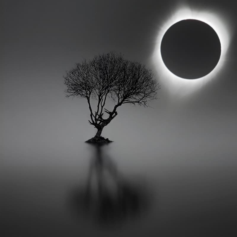 Eclipse and tree Noll
