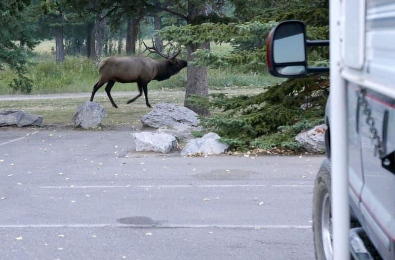 Elk Rock Resolution
