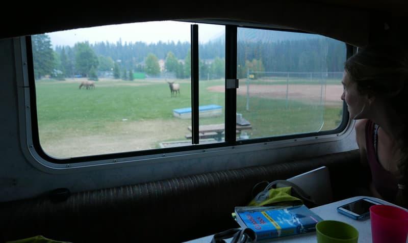 Elk bugling outside camper