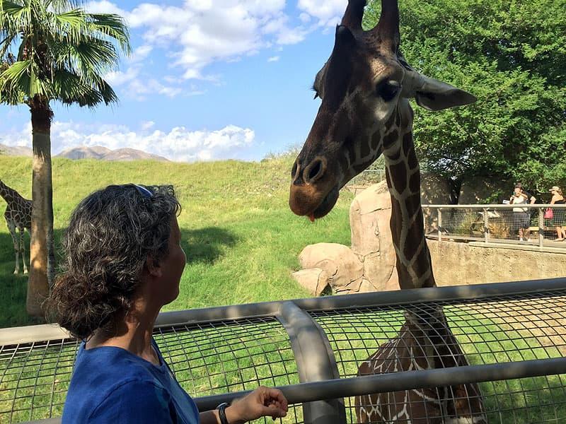 Giraffe at zoo, Ellen