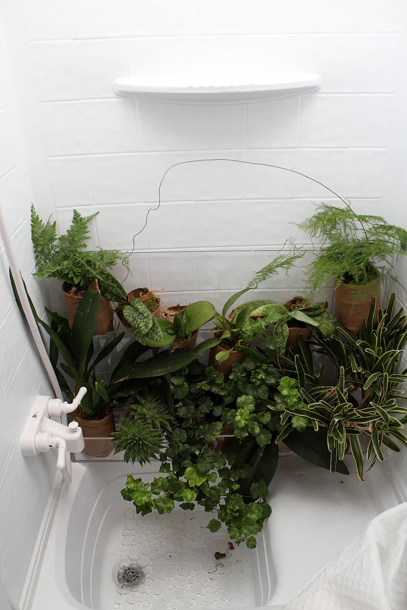 The camper shower acts like a greenhouse for plants