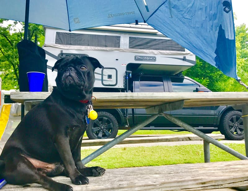 George The Pug Camper