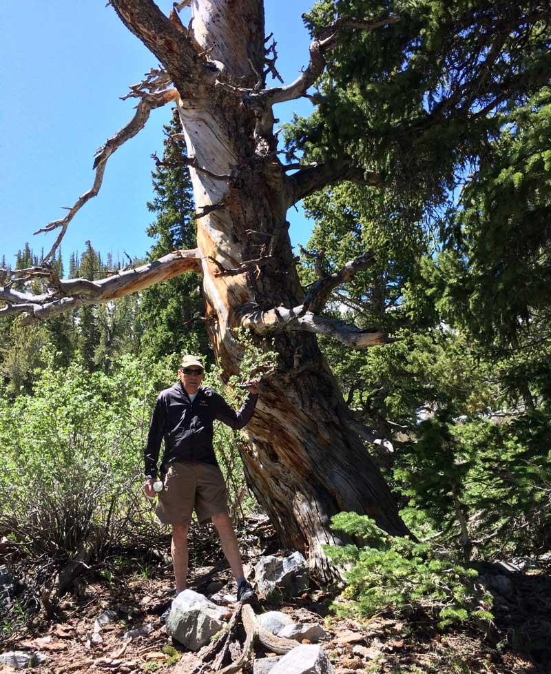 Great Basin National Bristlecone Pine Tree Hike