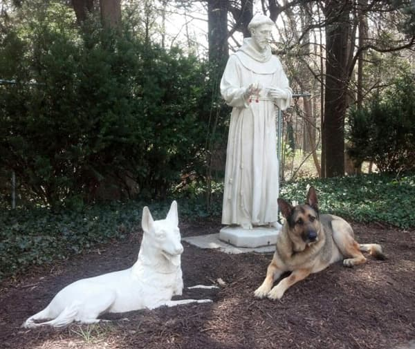 Guinness with St Francis and german shepherd