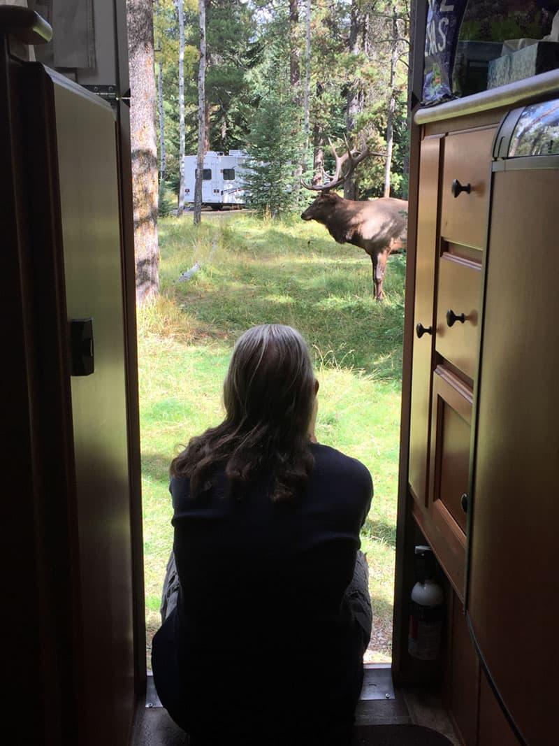 Jasper National Park, Whistler Campground