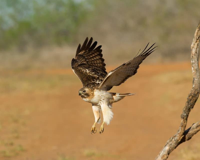 Birds at Laguna Seca Ranch near Edinburg, Texas
