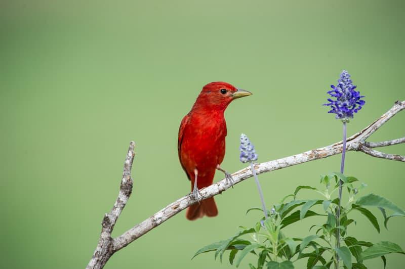 Bird photography from Laguna Seca Ranch near Edinburg, Texas
