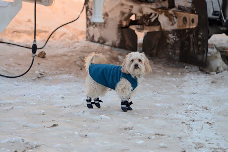 Mac best traveling dog