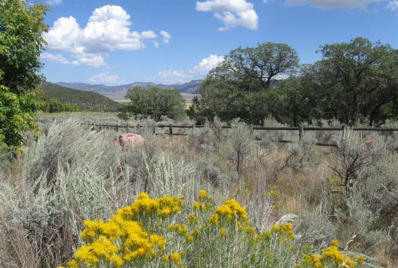 Maple Grove campground, Utah flowers