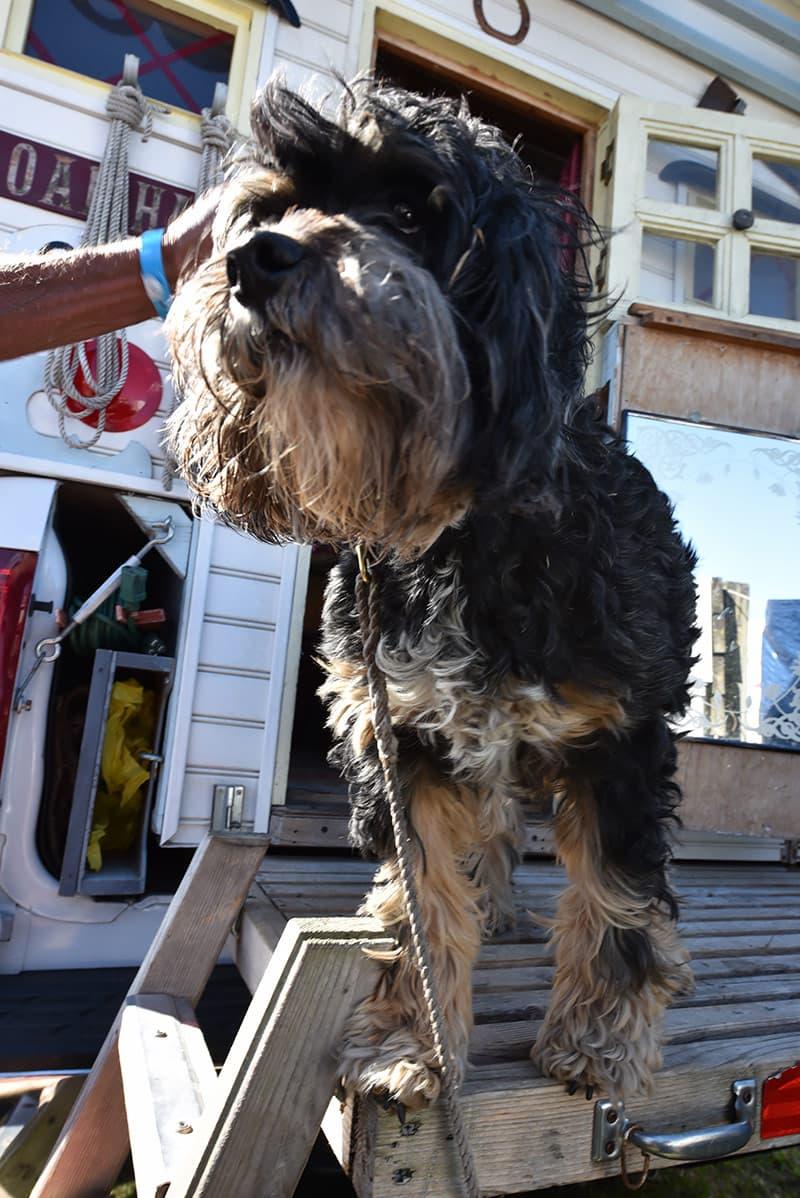 Bailey, the dog