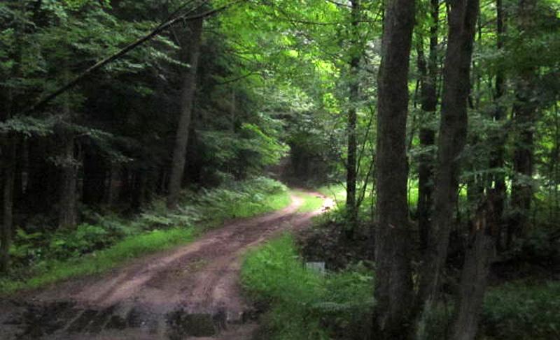 Michigan Forest Roads