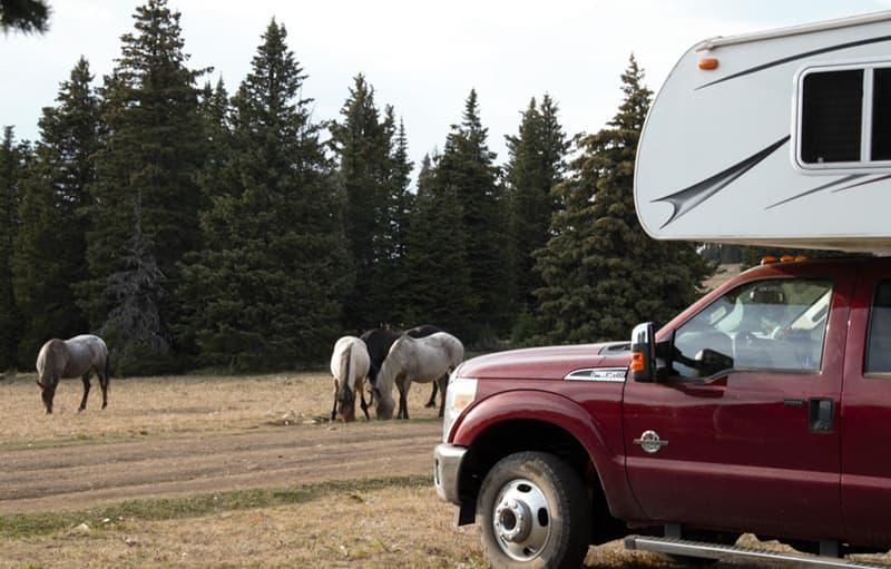 Mustangs Camping on Pryor Mountain