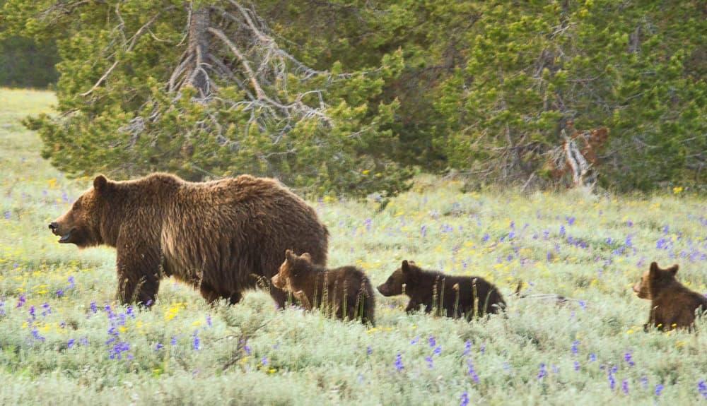 Grand Teton National Park Top 15 Bucket List