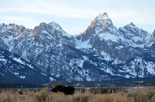 Tetons-and-Moose-Ruane