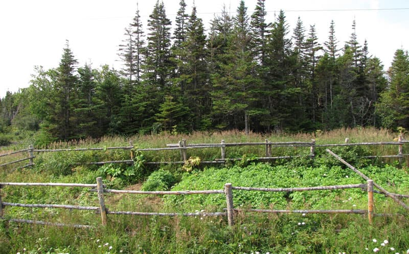 Newfoundland-roadway-gardens