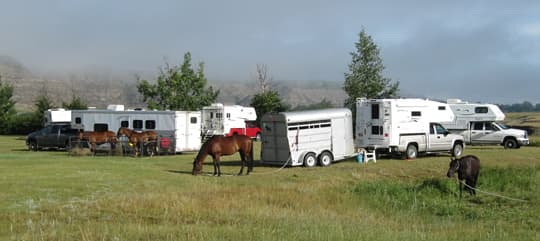 horse-camping-tether-horse
