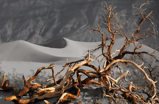 tc650-northstar-death-valley-tree