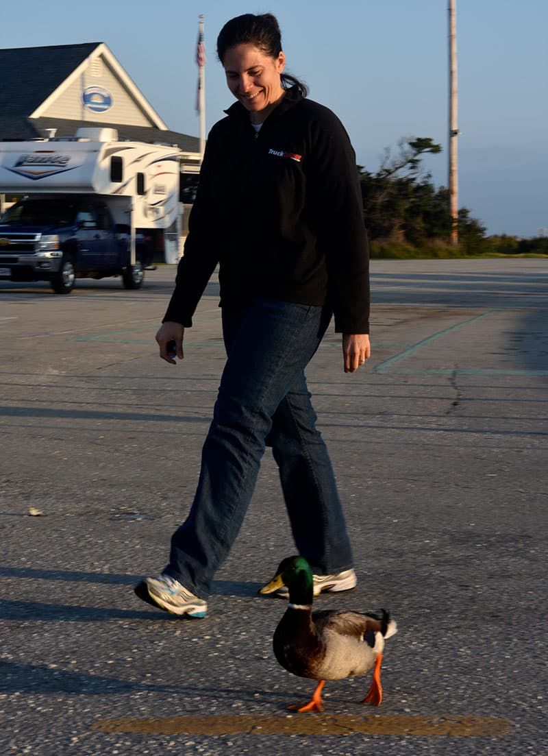 Ocracoke Island Walk With Duck