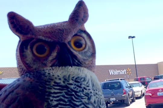Palomino-pop-up-beach-owl-walmart