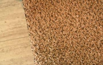 2017 Palomino camper carpet