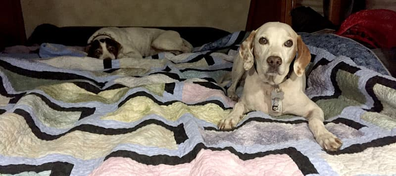 Parker and Sadie in Arctic Fox camper