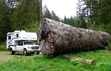 Port-Alberni-tree-Vancouver-Island