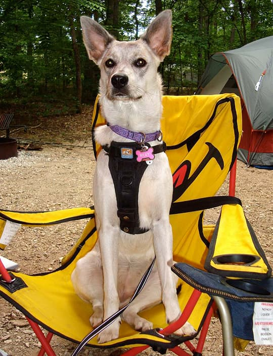 dogs camping Riley chair sit 1