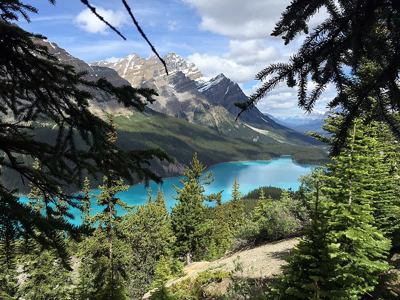 Peyto Lake on the Icefields Parkway
